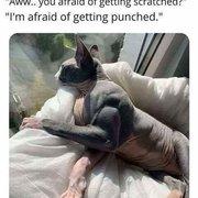 친구가 자기 동생이 키우는 고양이가 무섭다며 사진을 보냈다